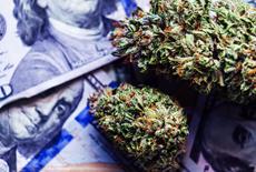 Como investir em Cannabis Medicinal